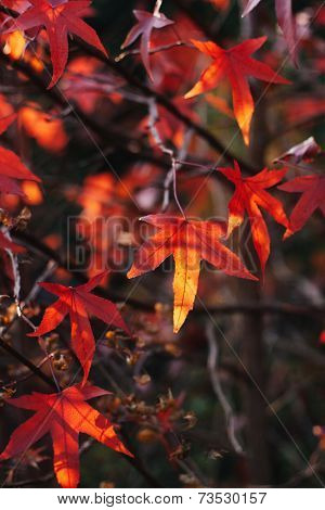 Sunlit leaves in autumn