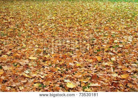 Grass covered in autumn leaves