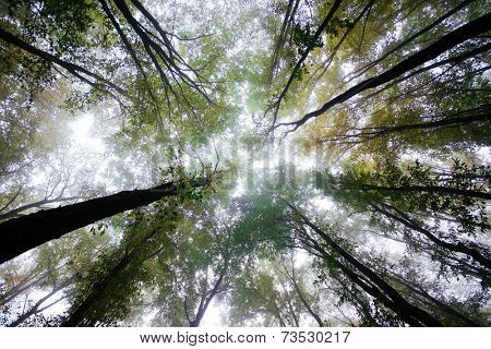 High forest treetops