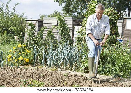 Senior Man Digging Vegetable Patch On Allotment