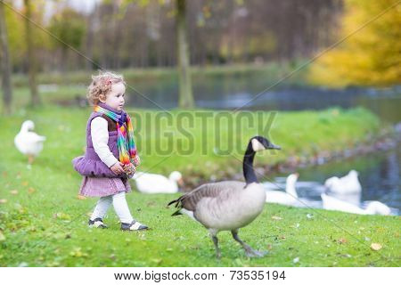 Cute Toddler Girl Chasing Wild Geese At A Lake In An Autumn Park