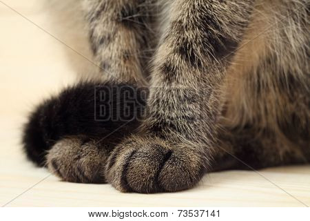 Cat's paws and tail