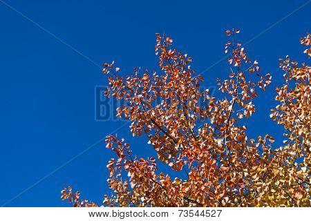 Fall Leaves And Vivid Blue Sky