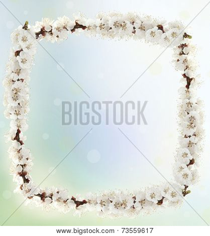 Frame of blossom on light background