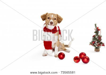 Portrait of cute dog wearing scarf beside christmas tree and baubles