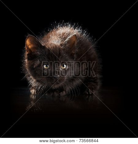 Black Kitten On A Black Background.