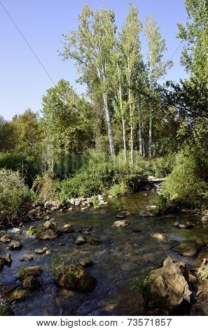 Hermon Stream Landscape, Israel.
