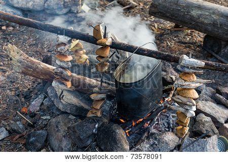 Camp Mushroomer