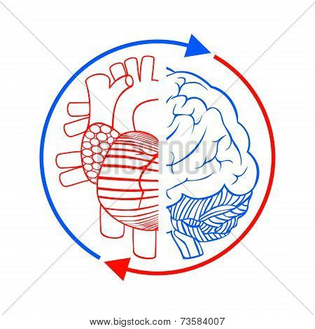Communication The Brain And Heart