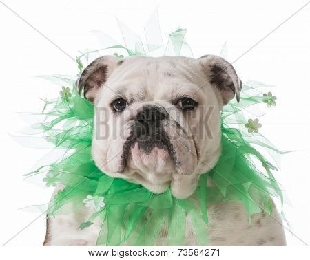 dog wearing green scarf isolated on white background