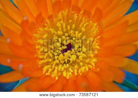 Orange Pigface