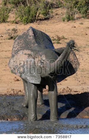 Banho de lama de elefante