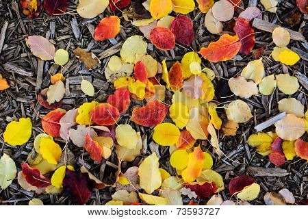Leaves and wood chips on the ground in fall