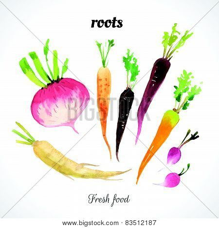 Watercolor Illustration Of Vegetables Of A Painting Technique.