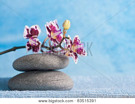 Pink Orchid And Spa Stones