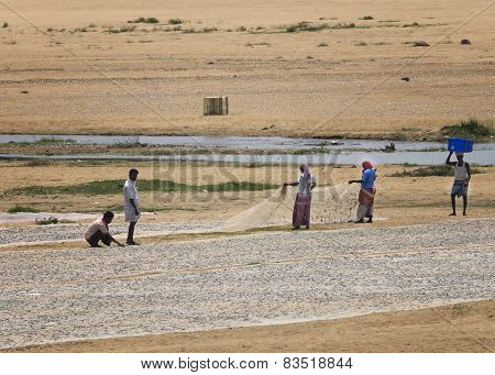 Emptying The Fish Nets On The Dry River Bed.