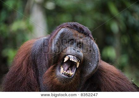 Samson Becomes Angry