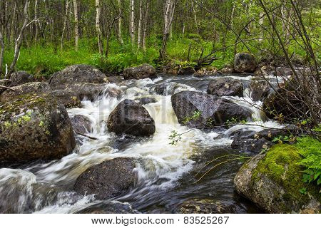 Fast Forest River