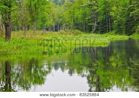 River In Forest
