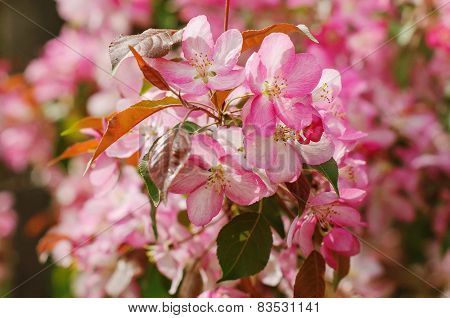 Spring Flowers On Branches