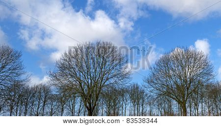 Geese flying over bare trees in winter