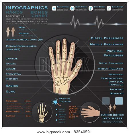 Hand Bone Skelatal System Infographic Infocharts Health And Medical