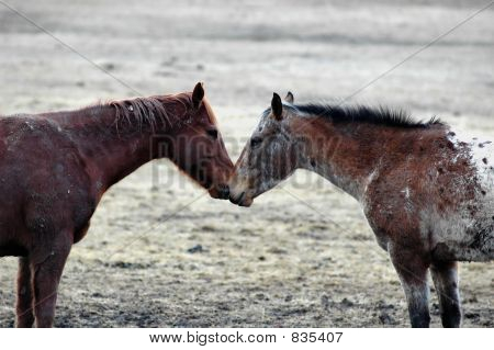 Equine Liebe