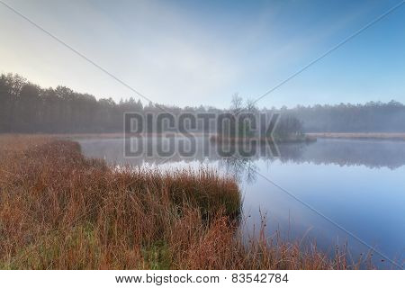 Wild Forest Lake In Autumn
