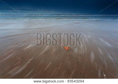Sea Star On Sand Beach Of North Sea