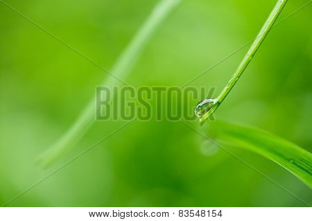 Water Droplet On Green Grass