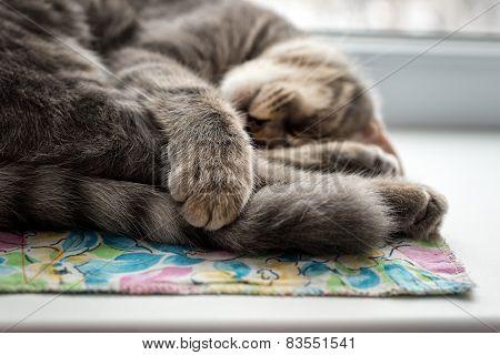 Lazy cat sleeping on windowsill. Selective focus.