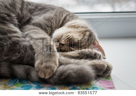 Lazy cat sleeping on windowsill. Selective focus.