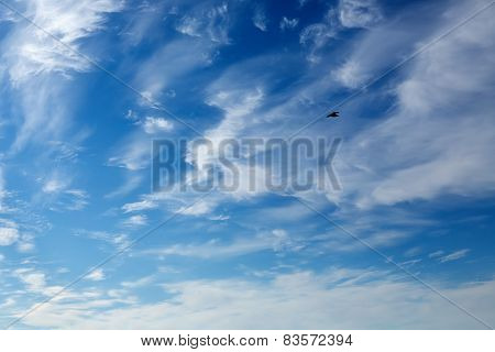 Deep Blue Sky And Seagull