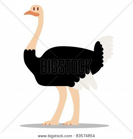 Vector Cartoon Ostrich Isolated On Blank Background
