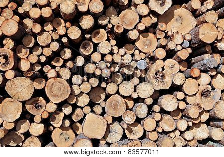 Set Of Felled Logs