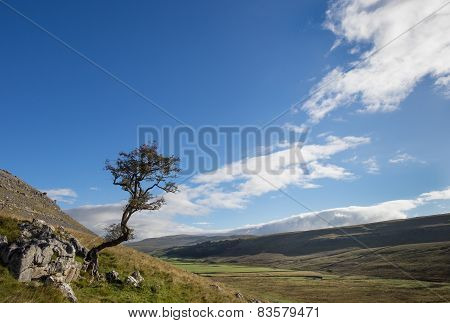 Kingsdale Tree