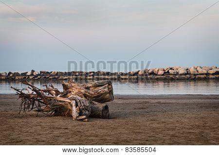 Trunk On The Beach