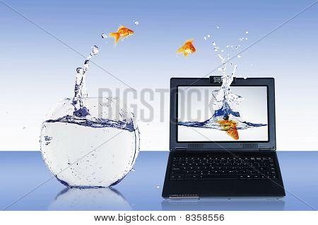 Goldfish und laptop