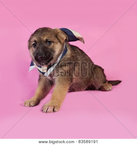 Brown Puppy In Blue Bandanna Sitting On Pink