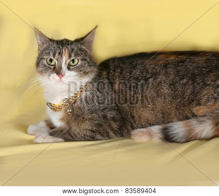 Tricolor Striped Cat Lying On Yellow