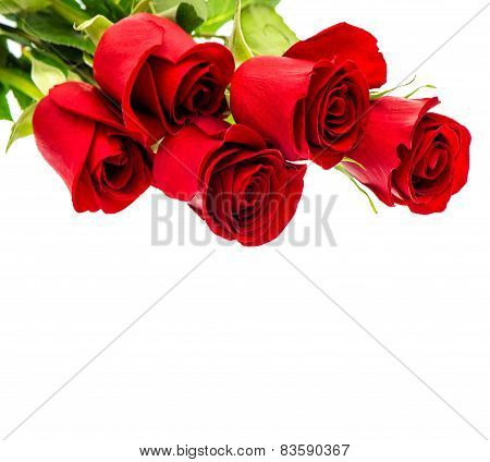 Red Roses Isolated On White Background. Bouquet Fresh Flowers