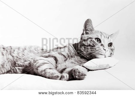 Cat reading newspaper on pillow