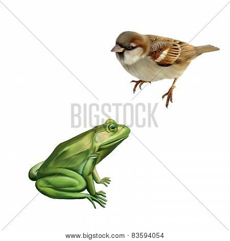 House Sparrow, Green frog. Isolated on white background