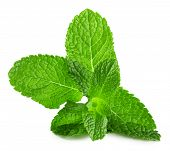 picture of mint leaf  - mint leaves isolated on the white background - JPG