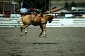 picture of bucking bronco  - rodeo cowboy at the moment where he is tossed off bucking bronco - JPG