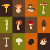 picture of morel mushroom  - Mushroom set with flat design - JPG