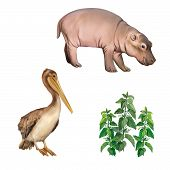 stock photo of hippopotamus  - baby hippopotamus - JPG