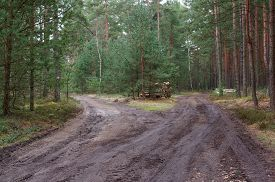 picture of pine-needle  - The photo shows a forest which crosses the forest - JPG
