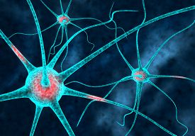 pic of neuron  - Multiple Brain illustration of neurons network connected - JPG