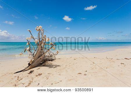 Idyllic Beach With Clear Water